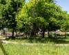 Verde pubblico a Solofra 1