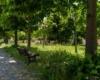 Verde pubblico a Solofra 3